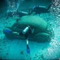 U-Beetle